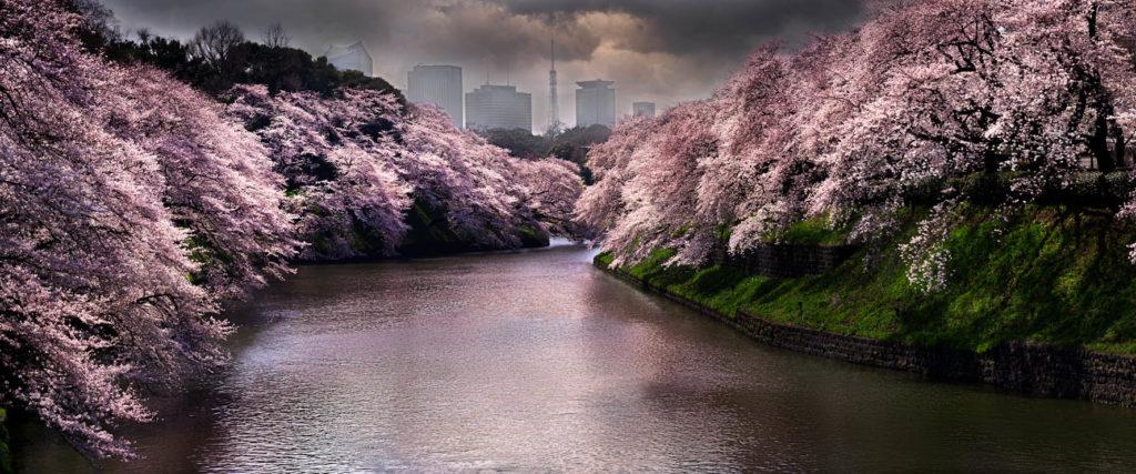 David Drebin Tokio